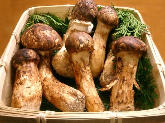 Most expensive food: Matsutake Mushrooms