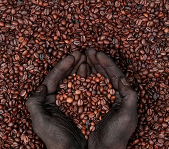 η καλλιέργεια καφέ